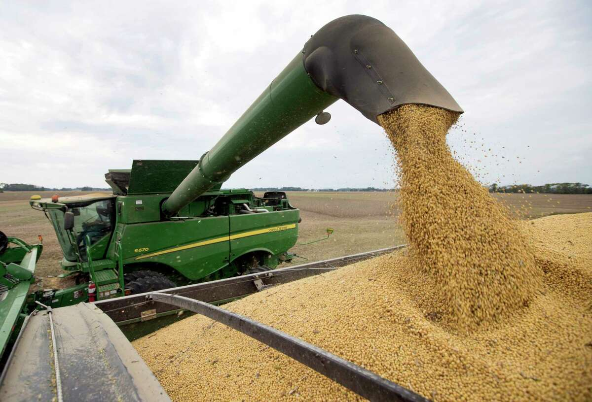 FILE - In this Sept. 21, 2018, file photo, Mike Starkey offloads soybeans from his combine as he harvests his crops in Brownsburg, Ind. About 27.5 million tons of US soybeans are expected to go unsold this year as a direct consequence of the trade war with China.