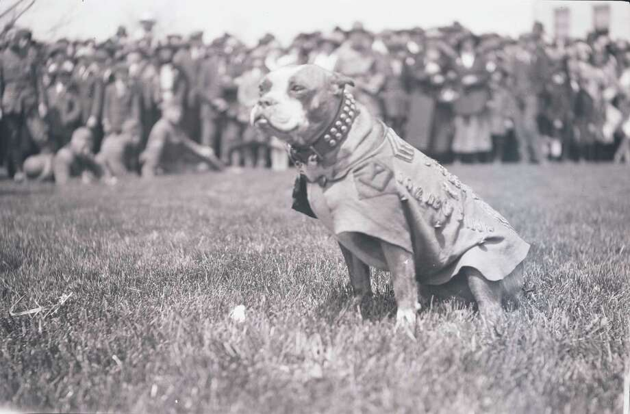 The real stubby in an archival photo. Photo: Connecticut State Library / Contributed Photo