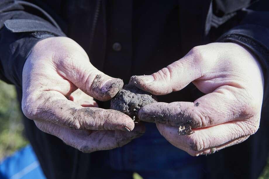 "A black Périgord truffle from the orchard at Jackson Family Wines in Santa Rosa. Photo: Alan Campbell Photography / ""Season"""