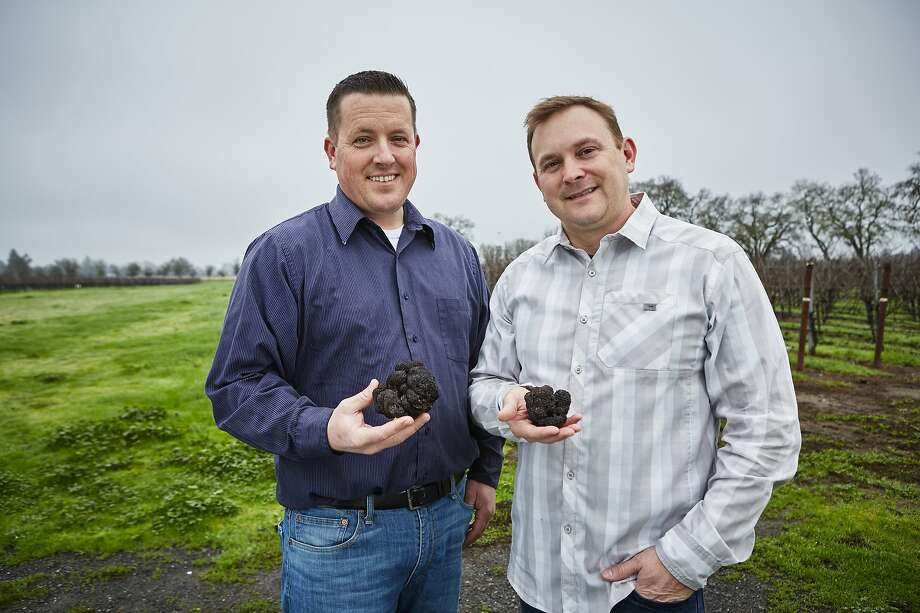 """Truffle orchard manager Brian Malone (left) and chef Justin Wangler at Jackson Family Wines in Santa Rosa. Photo: Alan Campbell Photography / """"Season"""""""
