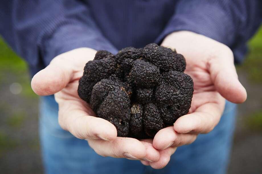 """Black Perigord truffles at Jackson Family Wines in Santa Rosa. Photo: Alan Campbell Photography / """"Season"""""""