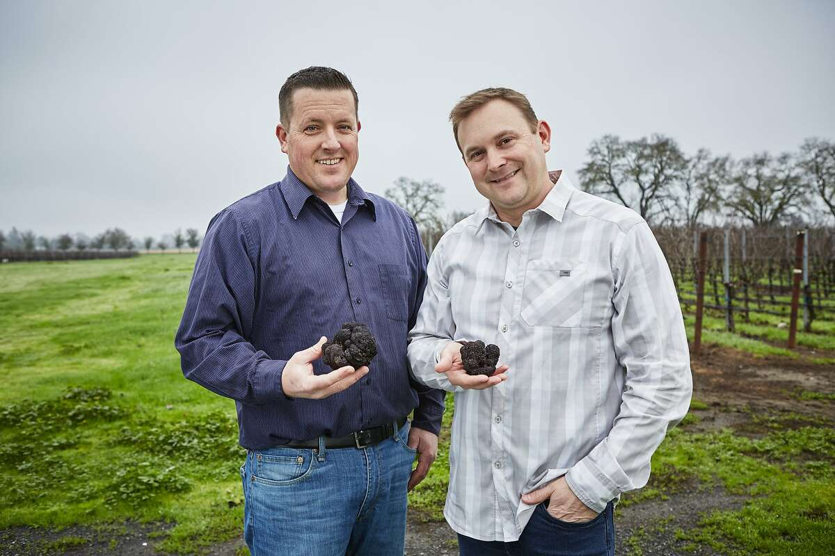 Truffle orchard manager Brian Malone (left) and chef Justin Wangler at Jackson Family Wines in Santa Rosa.