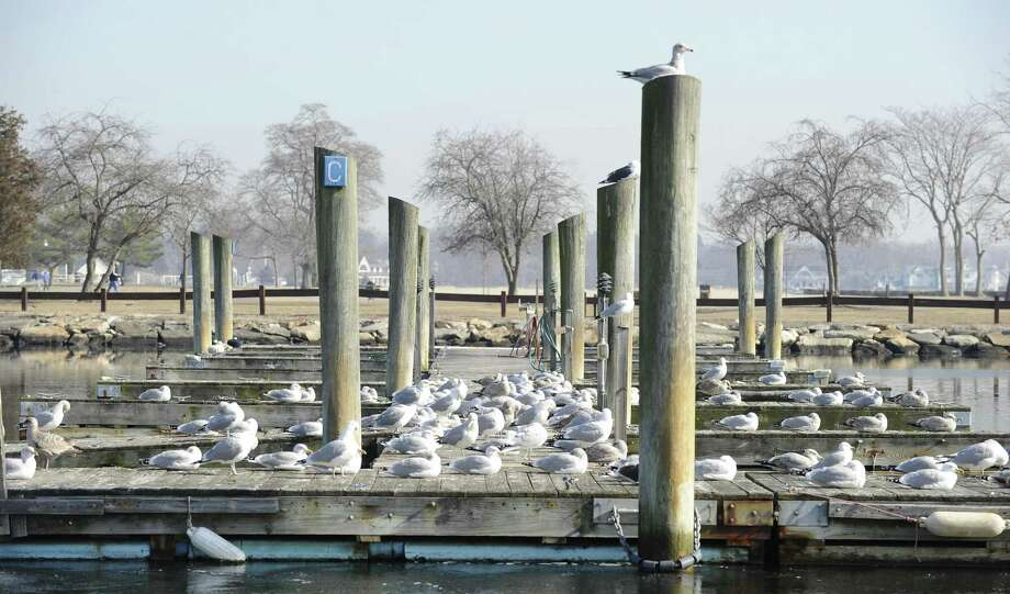 Sea Gulls bask in the warm sunshine at Cove Island Park Marina on Tuesday, Feb. 5, 2019 in Stamford, Connecticut. Photo: Matthew Brown / Hearst Connecticut Media / Stamford Advocate
