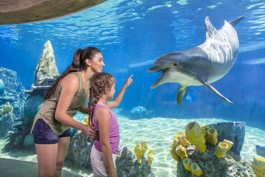 """SeaWorld announced the """"Preschool Card"""" and """"Teacher Card"""" program, which provides unlimited admission for the 2019 season, will return this year. According to a news release, the intent of the offer is to give teachers and their young pupils the opportunity """"to be inspired to protect animals and the wild wonders of the world."""" Photo: Courtesy, SeaWorld San Antonio"""
