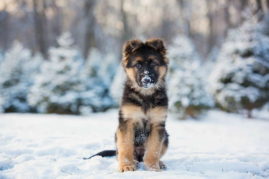The city of Midland is reminding residents it's illegal to leave their dogs outside when the temperature falls below 32 degrees and warns they could face repercussions for doing so. Photo: Kristin Castenschiold/Getty Images/500px