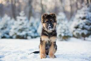 Consider Fido    Bring your outdoor pets inside, if you can. Keep dogs leashed when walking, as they can lose their scent and get lost in the snow, according to the  ASPCA . Use petroleum jelly on your animal's paws to protect them safe from de-icing chemicals and from getting chapped in the cold.
