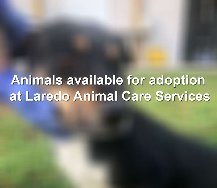 Keep scrolling to see dogs awaiting their forever homes at Laredo Animal Care Services. Photo: LACS