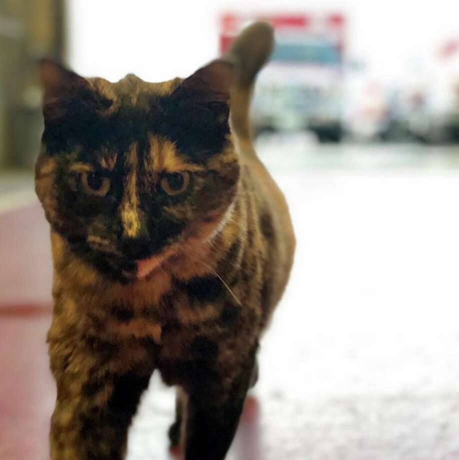 The employees at San Francisco Fire Department Station 49 say they are being asked to get rid of their cat, Edna, after an anonymous complaint was made. Those at Station 49 argue that the cat is a stress reliever, and have launched a social media campaign dubbed #ednastays in hopes that Edna will be allowed at the station. Photo: Courtesy @fire_cat_edna / Instagram