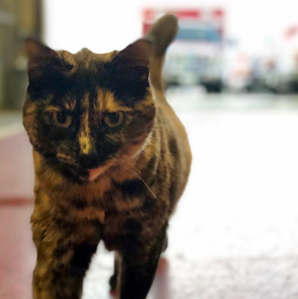 SF fire station says they're being asked to get rid of their beloved cat. But they want her to stay.