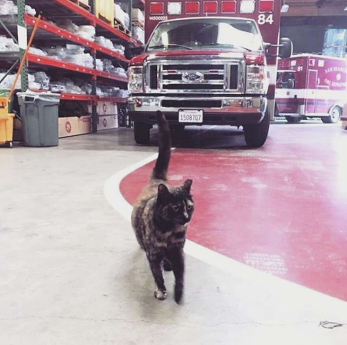 The employees at San Francisco Fire Department Station 49 say they are being asked to get rid of their cat, Edna, after an anonymous complaint was made. Those at Station 49 argue that the cat is a stress reliever, and have launched a social media campaign dubbed #ednastays in hopes that Edna will be allowed at the station.