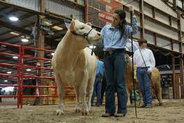 Meagan Buck of Kingwood Park High School prepares her steer for judging at the 72nd Humble Rodeo & BBQ Cook-Off from Feb. 1 to Feb. 9, 2019.