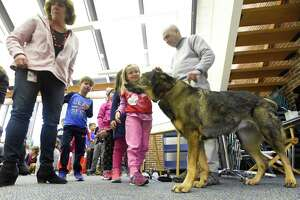 Holly Shattuck, a kindergartner at North Mianus School pets Kili, a seven-year-old German Shepherd guide dog that was visiting the chidren at the school on Friday, Feb. 8, 2019 in Greenwich, Connecticut. Alan Gunzburg, who is legally blind and Kili did a presentation about service dogs and guide dogs.