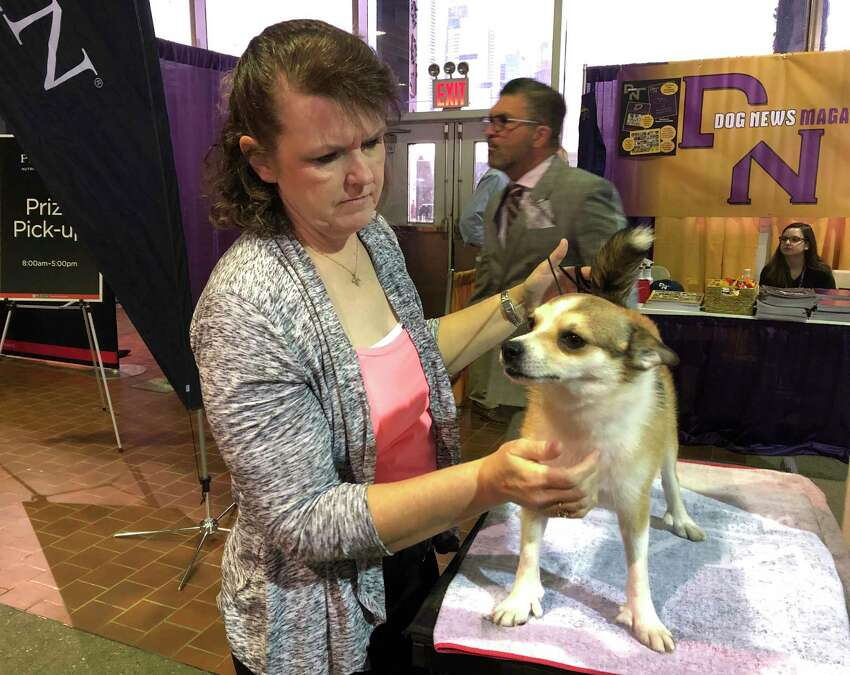 Tracy Rousseau of Franktown, Colo., pets Eva, a Norwegian lundehund, as they wait to compete at the Westminster Kennel Club dog show in New York on Monday, Feb. 11, 2019.
