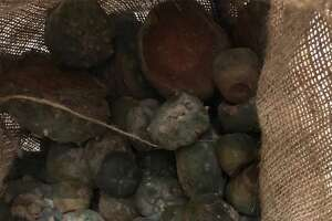 Laredo Sector Border Patrol agents seized peyote while conducting a checkpoint operation near Freer on Saturday, CBP said.