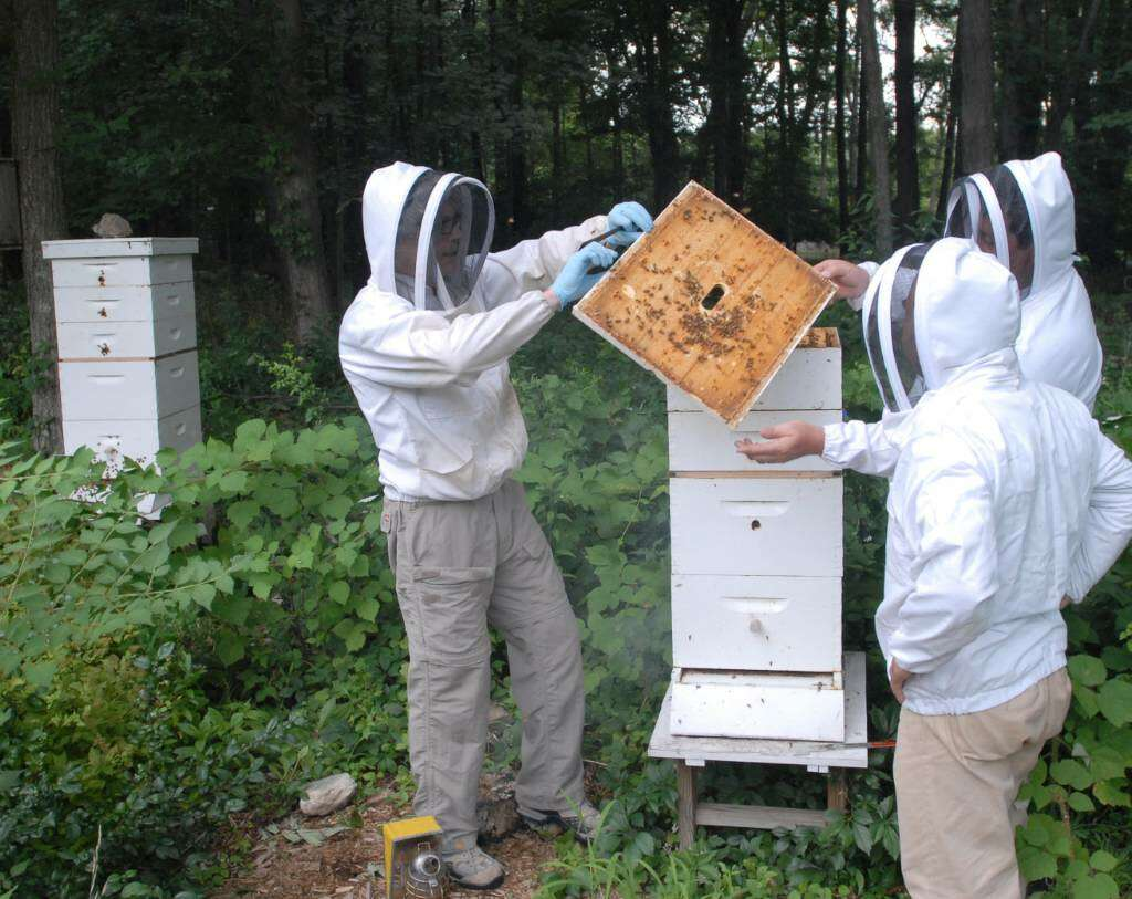 busy bees dozens of backyard beekeepers tend to their greenwich