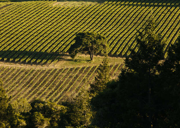 A lesson in aromatic white wines