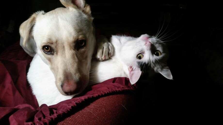 Paul Keane's pets Photo: Paul Keane