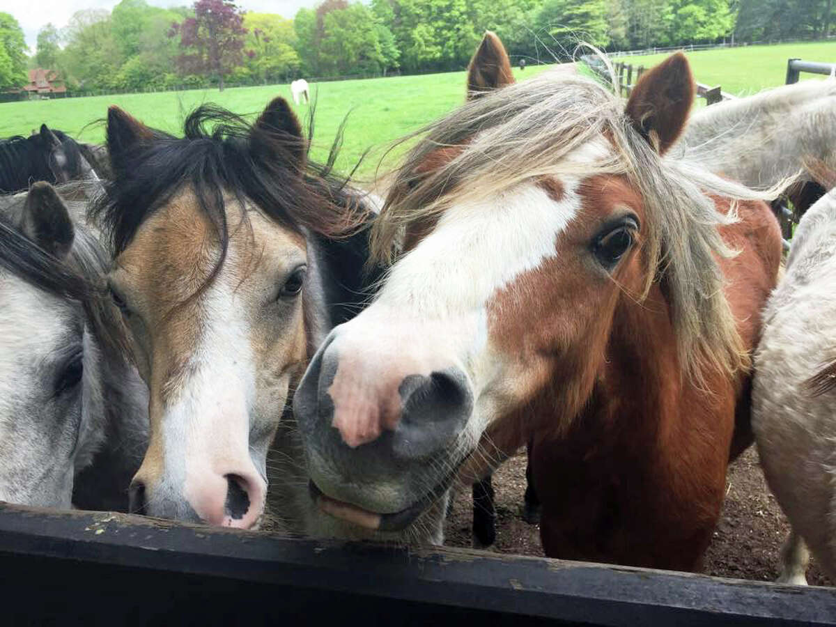 Researchers effectively used TraDIS, a genetic tool used in horses.
