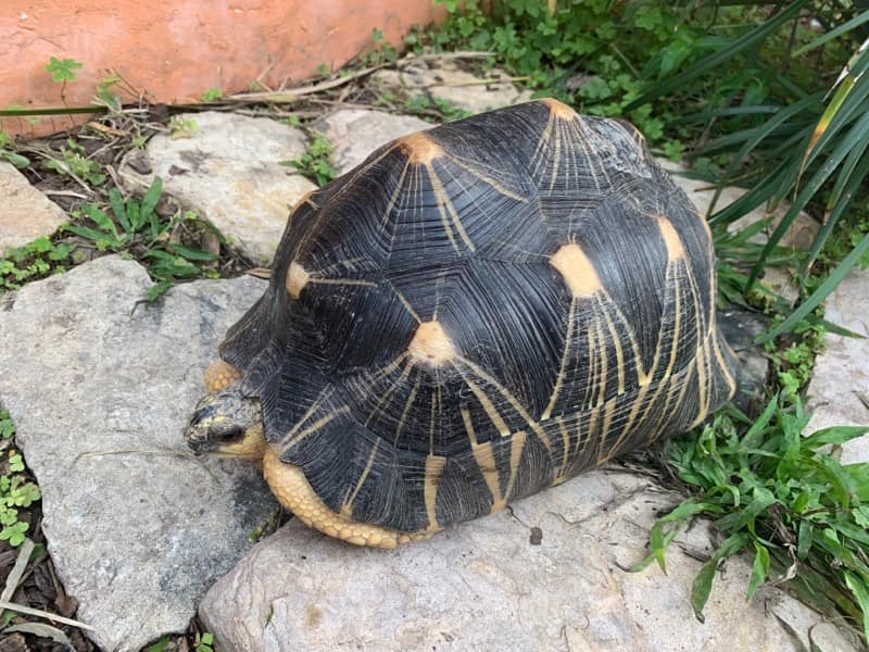 South Texas man charged with theft for allegedly stealing tortoise from Brownsville zoo