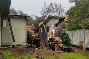 """In Atascadero in San Luis Obispo County, a massive tree fell onto a house, displacing its residents. """"This storm is not only bringing rain, but heavy and sustained winds that stress trees in the already saturated soil,"""" the Atascadero Fire Department warned."""