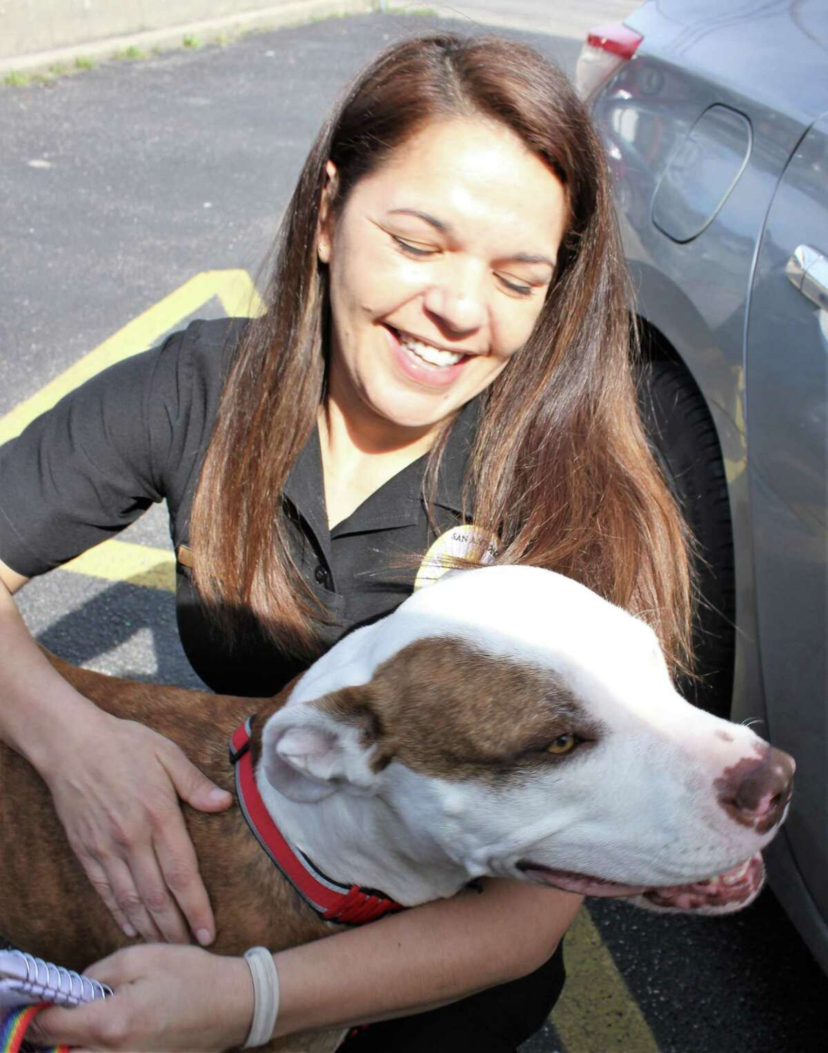 Animal Care Services supervisor Aimee Decontreras greets Trixie, a a female Staffordshire bull terrier, whowent missing from her home in Austin on Christmas Eve. Trixie was brought to Animal Care Services in early February as a roaming dog. An unidentified man walked into the kennel and led her to his car. Regina Briskeyand her boyfriend found Trixie at a North Side service station and brought her to a veterinary clinic that found a microchip that led to her being reunited wither owner AngelOntiveros.