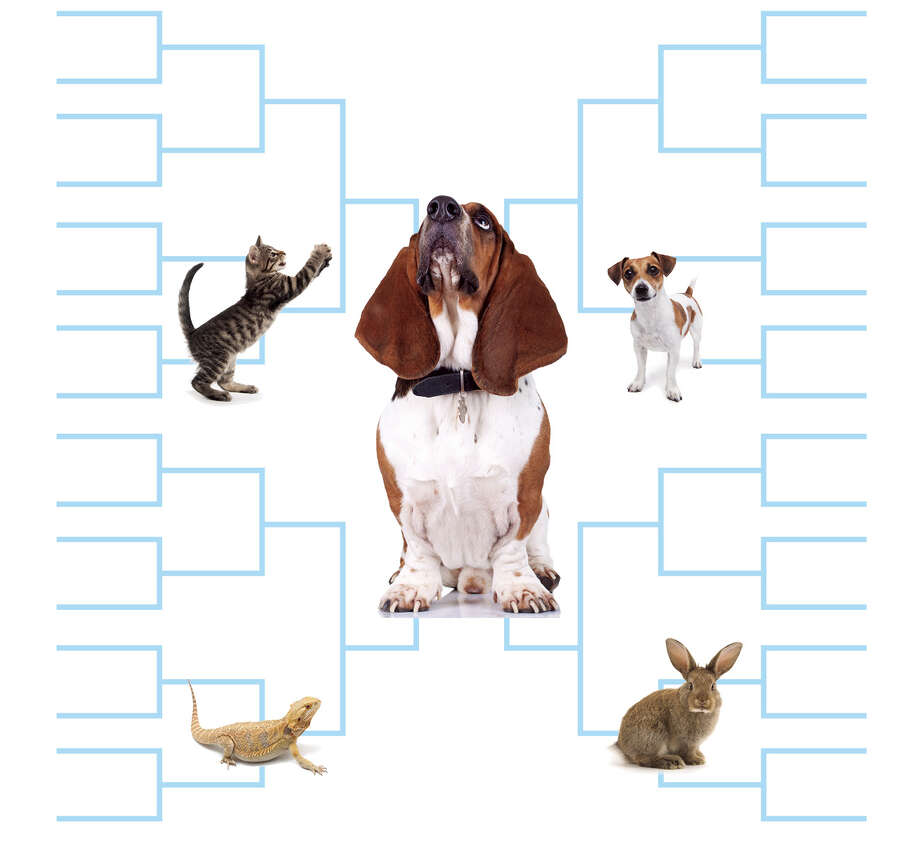Vote now for your favorite pet competitors.  Photo: Staff