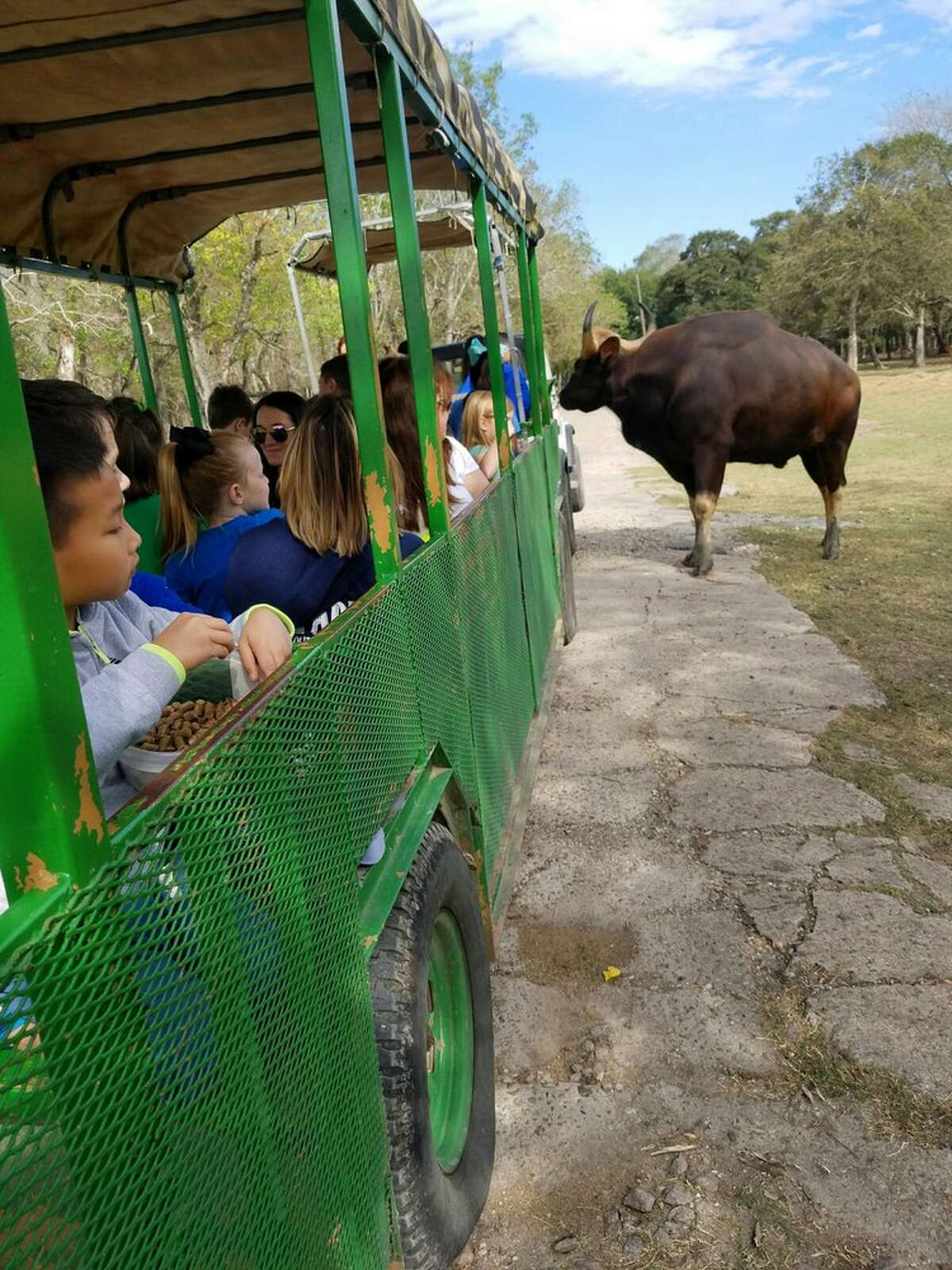 Alvin: Bayou Wildlife ZooThe zoo, which recently reopened under new COVID-19 restrictions and at the hands of new owners, is a free-range facility that allows guests to feed animals straight from trams. Photo courtesy Jo J/Yelp