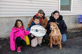 """One of the 21 dogs that found its forever home during the """"Free the Shelters"""" weekend from Feb. 8 to Feb. 10, 2019, in Bridgeport, Conn."""