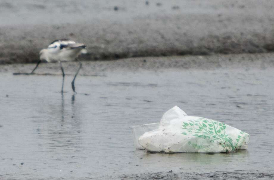 Connecticut is considering banning single-use plastic bags, which are detrimental to the environment. A bird picks around a disposed plastic bag during low tide in Oakland, Calif., Feb. 12. Photo: Jessica Christian / The San Francisco Chronicle / ONLINE_YES