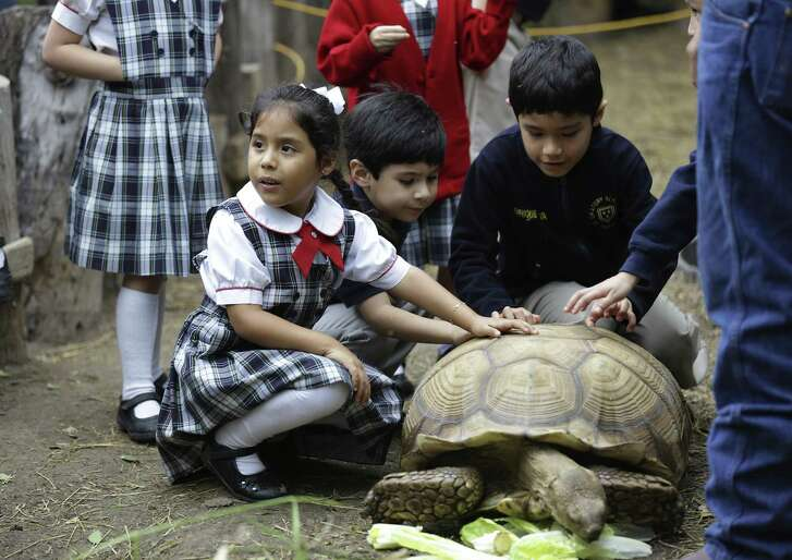 Raelyn Jo Cardenas, left, a student from Pharr Oratory School of St. Phillip Neri in Mission, Tx. , touches an African turtle during a tour with fellow students at the National Butterfly Center on Friday, Feb. 8, 2019.