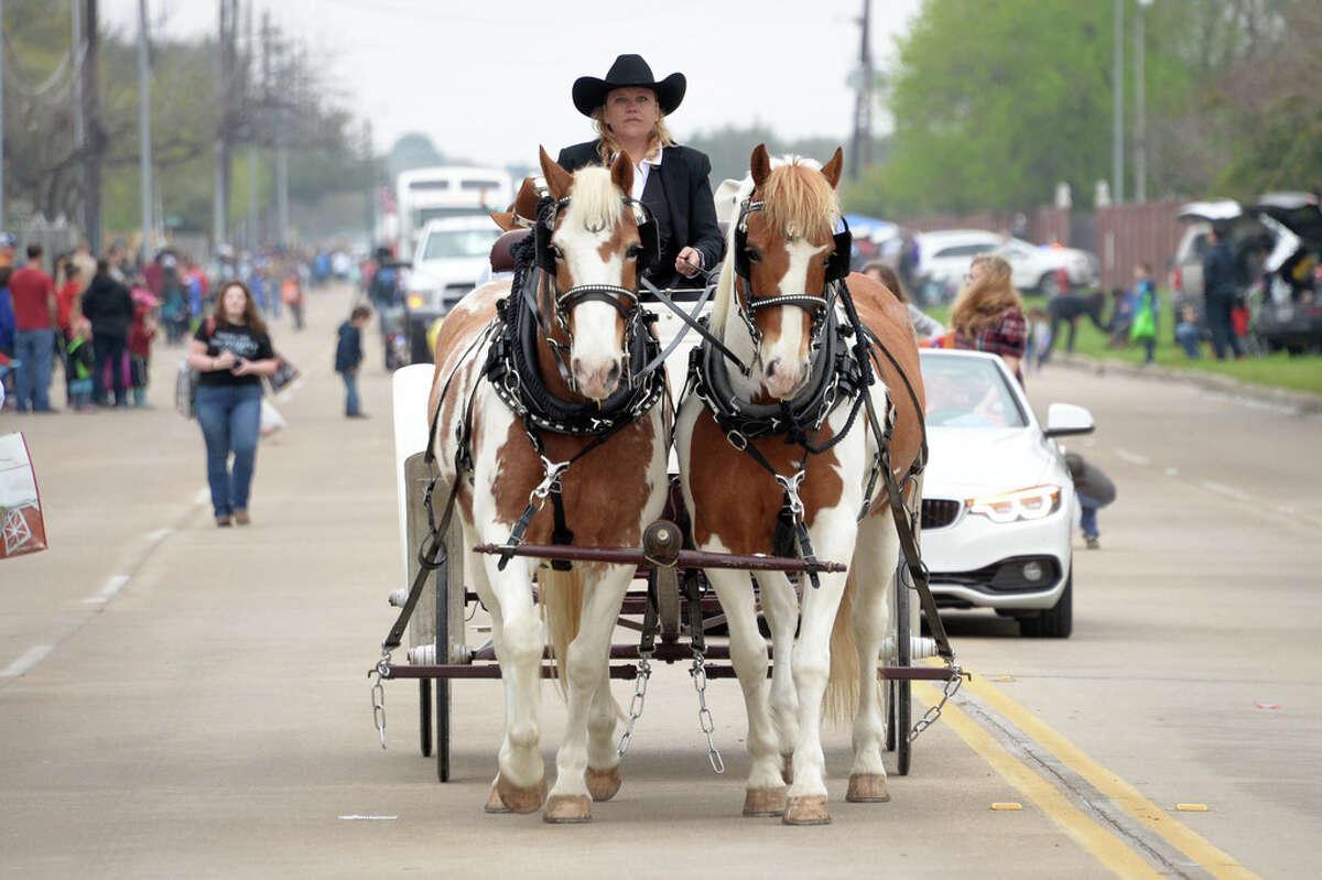 A horse-drawn wagon participates in the Katy Rodeo Parade, Katy, TX on Saturday, February 16, 2019.