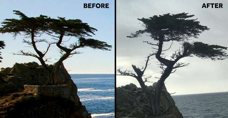 The famed Lone Cypress on the 17-Mile Drive in Monterey was damaged by California storms in Feb. 2019. Photo: KSBW