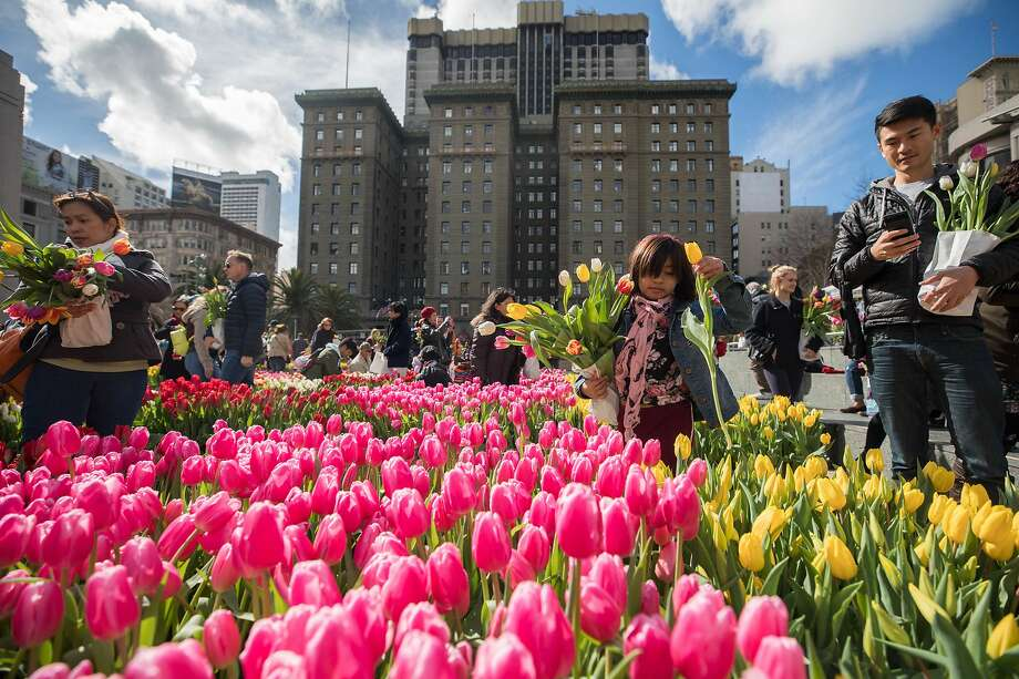 American Tulip Day in Union Square. Photo: Anthos