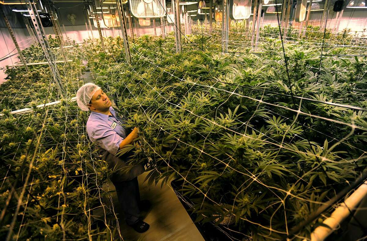 A medical marijuana grow room at Advanced Grow Labs in West Haven, in a 2015 file photo.