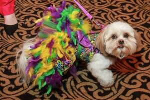 Lulu at Interfaith Ministeries' The Best Friends Brunch at Hotel Zaza, benefitting AniMeals on Wheels.