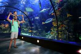 While you're at Moody Gardens, make sure you visit its indoor attractions, such as the recently renovated Aquarium Pyramid, home to a 1.5-million-gallon aquarium and all-new exhibits that house penguins, sharks and more.