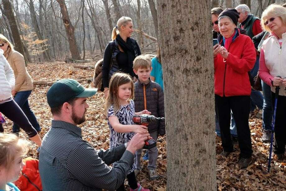 Join the Greenwich Land Trust for Maple Sugar Day on Feb. 23 Photo: Contributed