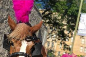 5. Some horses like riding downtown while others prefer doing private events only.    A horse knows wants what it wants.