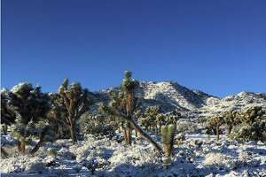 Joshua Tree National Park saw snowfall on the night of Feb. 17, 2018. The next day, the ground was dusted in fresh powder.