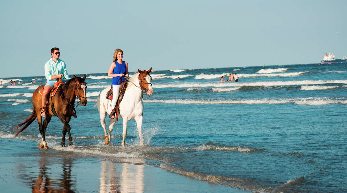 Galveston Island Horse & Pony Rides Sitting high in the saddle as you tour the beach on horseback offers a unique perspective that can't be duplicated. The folks at Galveston Island Horse & Pony Rides, founded by people who are passionate about horses and the beautiful coastal landscape, carefully select and train their horses to ensure that you have an enjoyable riding experience even if you don't possess superior equine skills.