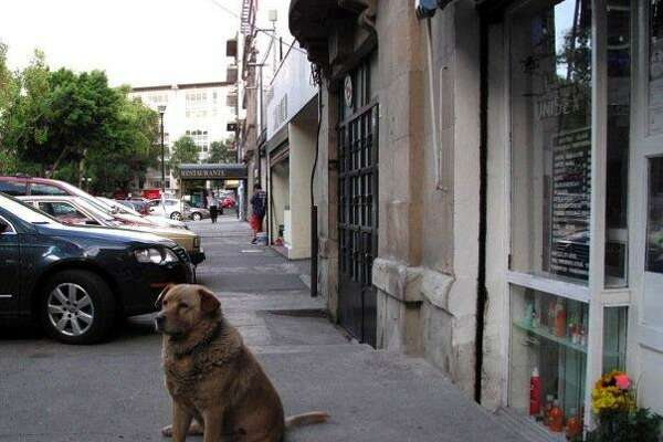 Image result for mangy dogs in city photos