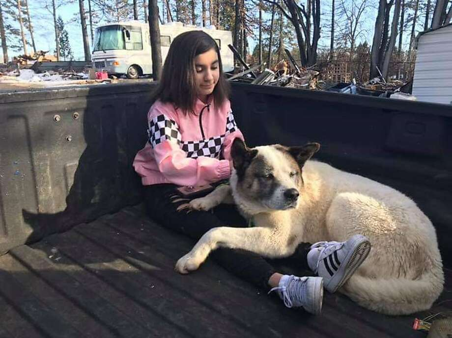 This Feb. 18, 2019 photo provided by Ben Lepe shows Maleah Ballejos reunited with her dog Kingston in Paradise, Calif. The Akita named Kingston was reunited with his family 101 days after he jumped out of their truck as they fled a devastating Northern California wildfire. (Ben Lepe via AP) Photo: Ben Lepe, Associated Press