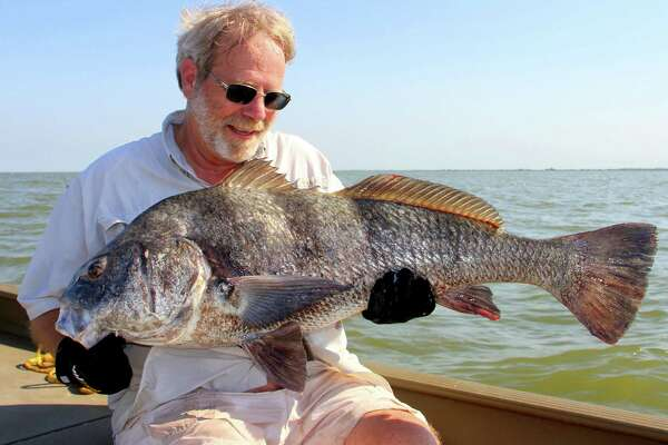 Black drum gathering for their annual spawn offer coastal anglers opportunity to enjoy catch-and-release fishing for a big, powerful and cooperative quarry when fishing for other popular species remain in winter doldrums.