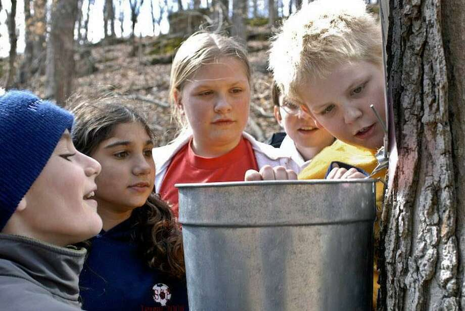 The Greenwich Land Trust is hosting its annual Maple Sugar Day from 11 a.m. to 2 p.m. Saturday at its 4-acre Mueller Preserve at 370 Round Hill Road. Photo: James Fashing / © Missouri Department of Conservation