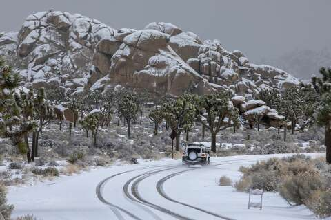 Joshua Tree Dusted In Rare Snow Making An Already