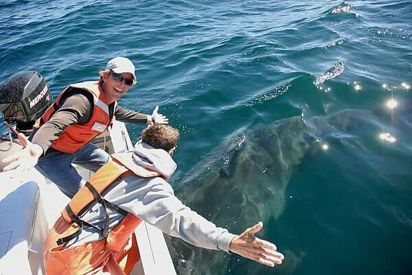 Salvador Jorgensen, a senior research scientist at the Monterey Bay Aquarium, celebrates after affixing an electronic tag on a great white shark