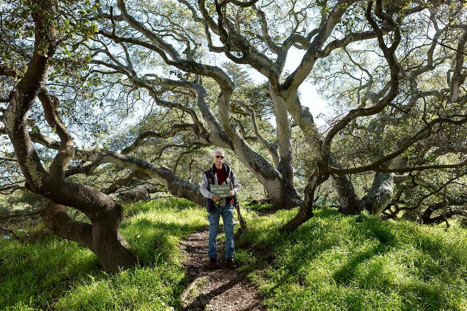 New trail through some of San Francisco's oldest coast live oaks opens
