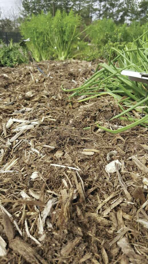 Hardwood mulch will add nutrients to your landscape as it composts.