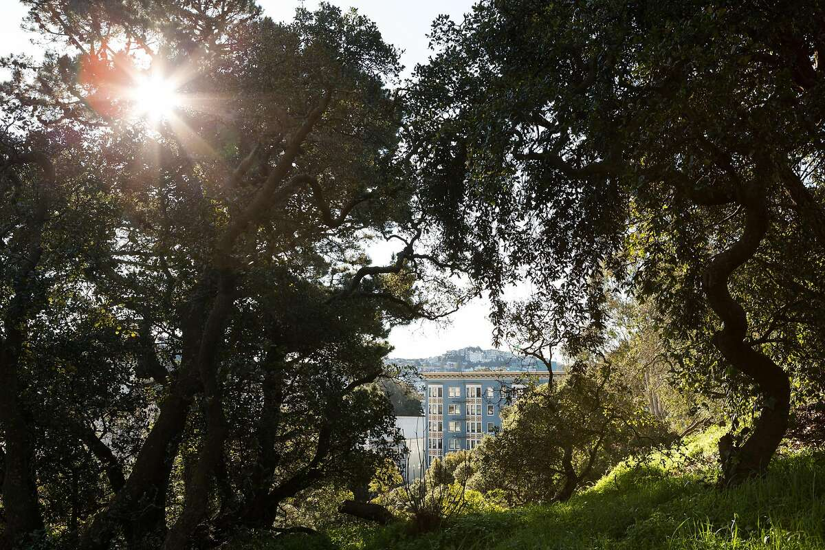 View from the Phil Arnold Trail at Golden Gate Park in San Francisco, California, on Friday, February 22, 2019.