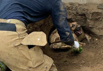 5c1ab77150578 1of50A dog named Taylor and a tortoise named Godzilla were rescued from a  hole in Southern California. Click through the gallery for more crazy  animal ...